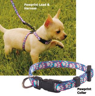 This image has an empty alt attribute; its file name is collar-and-leads.jpg